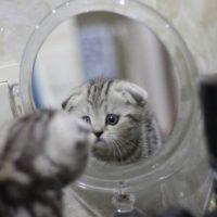 the-kitten-looks-in-the-mirror-5491982_640